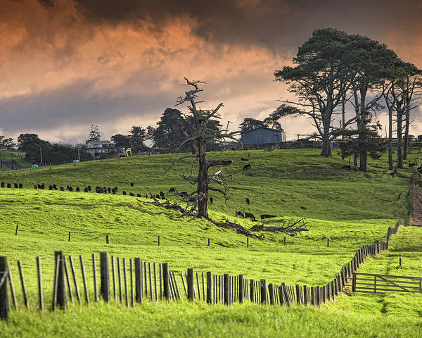 Horizontal Poster featuring the photograph Long Bay Fields by Mark Meredith