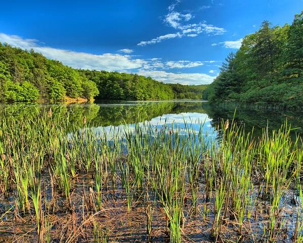Long Branch Lake Poster featuring the photograph Long Branch Lake Marsh by Adam Jewell
