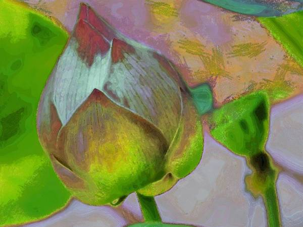 digital Art Poster featuring the digital art Lotus Dreaming 1 by Fran Woods