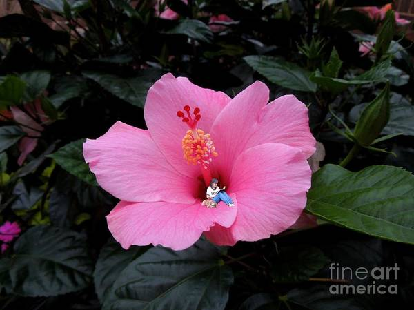 Hibiscus Poster featuring the digital art Lounging In A Hibiscus by Renee Trenholm