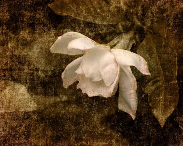 Antique Poster featuring the photograph Love Letter Ix Cape Jasmine Gardenia by Jai Johnson