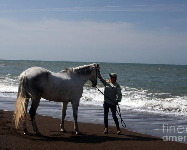 Horse Poster featuring the photograph Love's Touch by Juan Romagosa