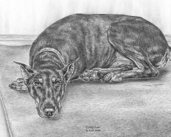 Doberman Poster featuring the drawing Lying Low - Doberman Pinscher Dog Art Print by Kelli Swan