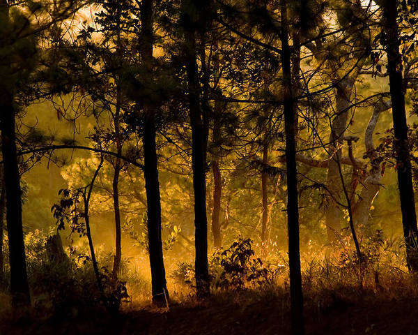 Forest Poster featuring the photograph Magic Shadow Of Tree by Tom Sak