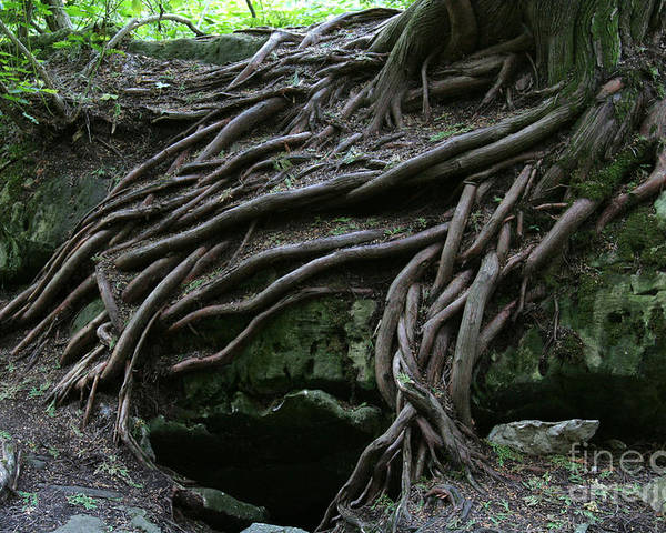 Roots Poster featuring the photograph Magical Tree Roots by Chris Hill