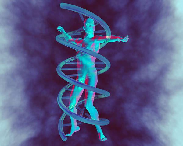 Double Helix Poster featuring the photograph Man And Dna by Christian Darkin