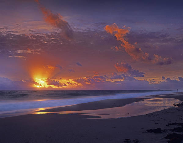 00175852 Poster featuring the photograph Mcarthur Beach At Sunrise Florida by Tim Fitzharris