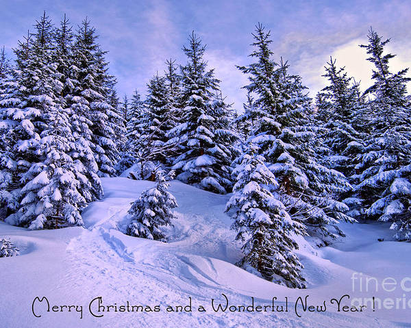 Winter Poster featuring the photograph Merry Christmas And A Wonderful New Year by Sabine Jacobs