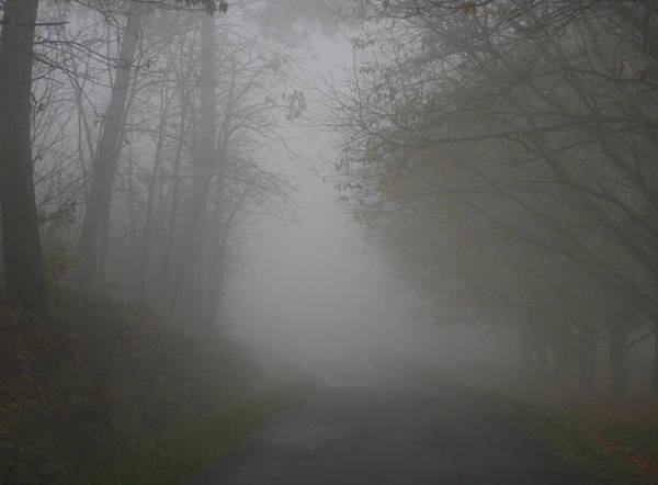 Tree Poster featuring the photograph Mist Fog And The Road by Georgia Fowler