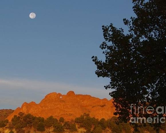 Moon Poster featuring the photograph Moon Above Kissing Camels by Brandi Christon