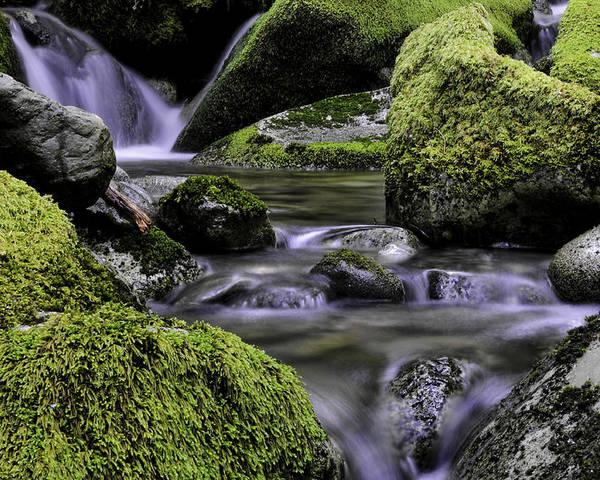 Water Poster featuring the photograph Mountain Creek by Jill Bingham-Daniels
