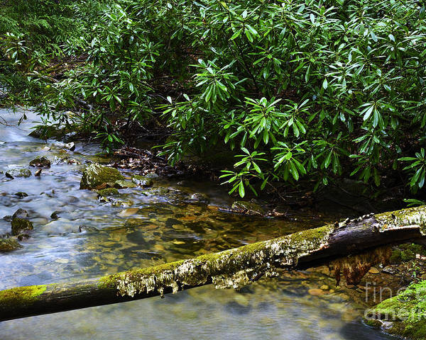 Rushing Mountain Stream Poster featuring the photograph Mountain Stream And Rhododendron by Thomas R Fletcher