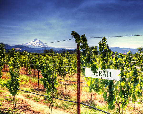 Mt Hood Poster featuring the photograph Mt Hood Winery by Vicki Jauron