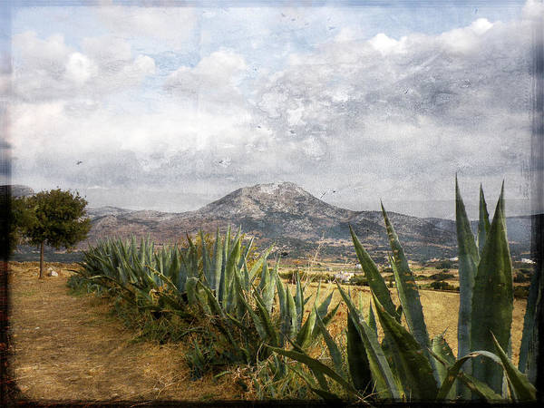 Aloe Poster featuring the photograph Mt Zeus by Stacey Granger