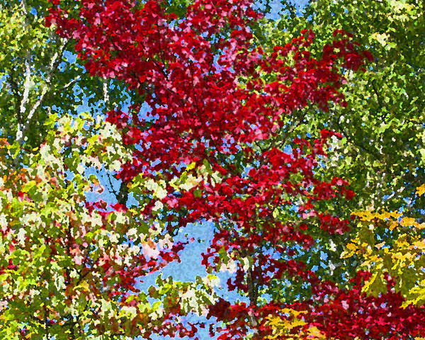 Colorful Poster featuring the photograph Muskoka Autumn Leaves by Dr Carolyn Reinhart