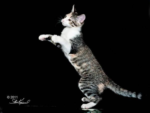 Cat Poster featuring the photograph My Bunny Hop Dance by Steve Knievel