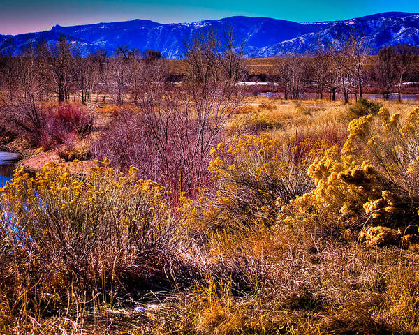 Denver Poster featuring the photograph Nature At It's Best In South Platte Park by David Patterson