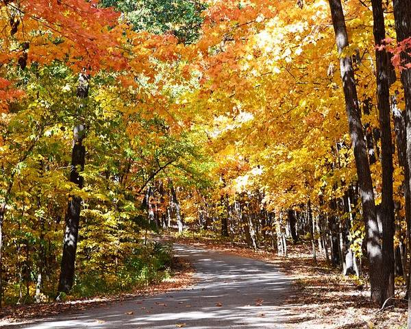 Fall Poster featuring the photograph Nature Drive by Kim Hymes