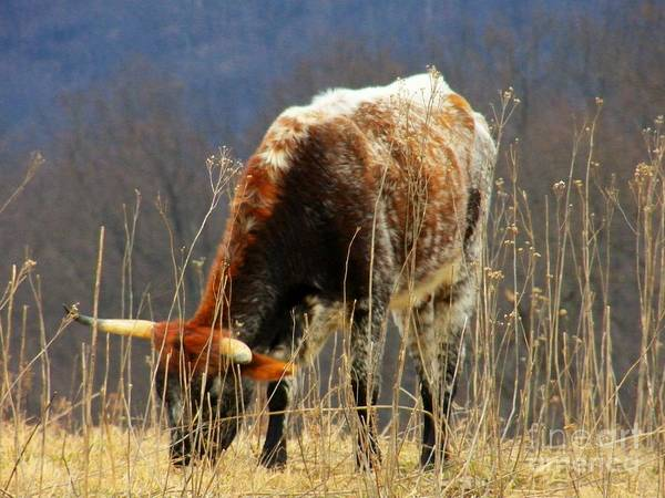 Animals Poster featuring the photograph No Bull by Joyce Kimble Smith