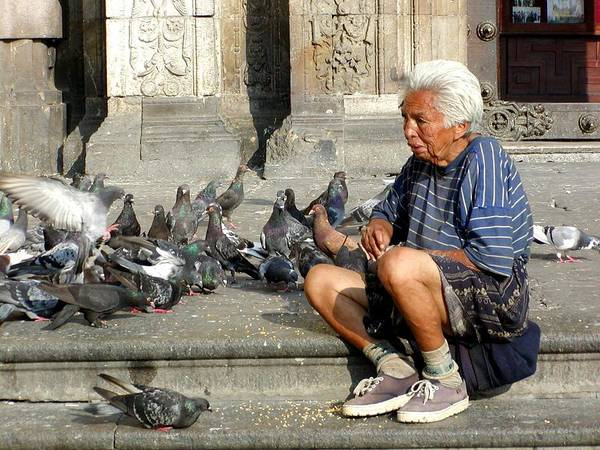 Old Poster featuring the photograph Old Man With Doves by Sasha Grebenyuk