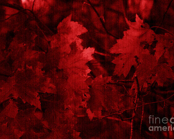 Leaf Poster featuring the photograph Old Red by Marjorie Imbeau