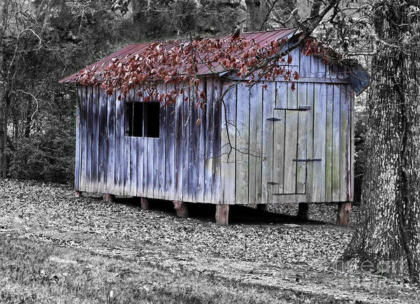 Vintage Poster featuring the photograph Old Weathered Shed by Betty LaRue