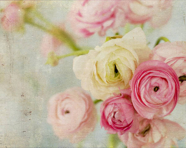 Ranunculus Poster featuring the photograph One Fine Day by Kristy Campbell