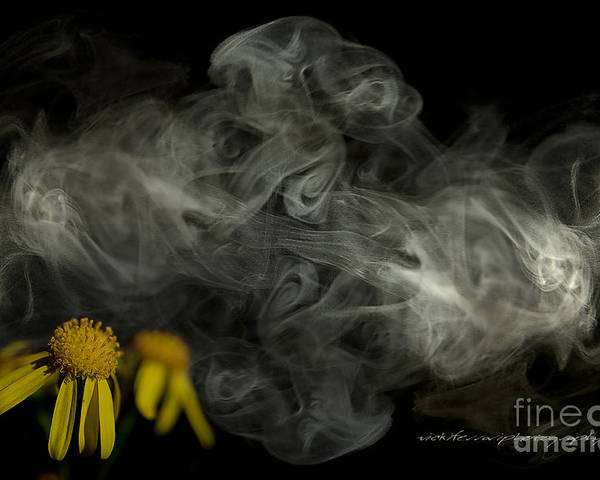 Poster featuring the photograph Optimisticly Dense Daisies by Vicki Ferrari Photography