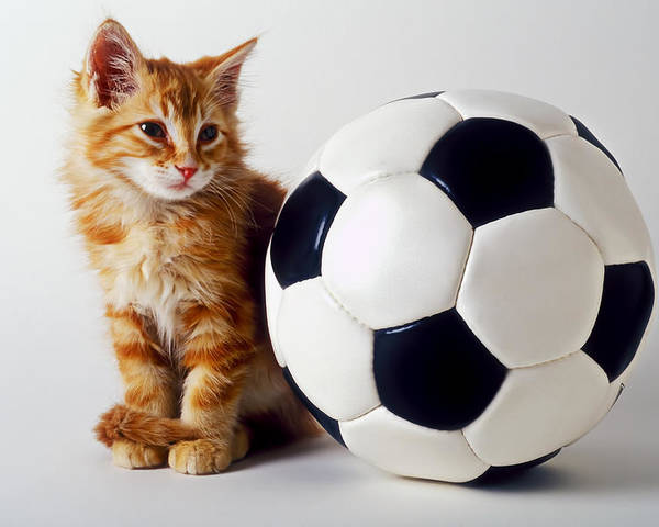 Cat Poster featuring the photograph Orange And White Kitten With Soccor Ball by Garry Gay