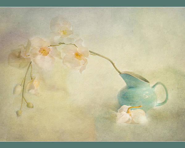 Still Life Poster featuring the photograph Orchid by Marina Astakhova
