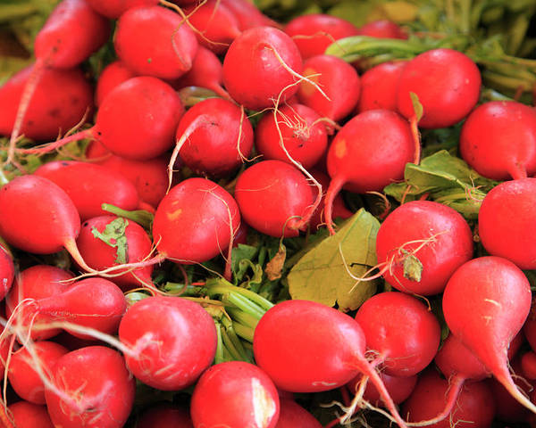 Horizontal Poster featuring the photograph Organic Radishes by Wendy Connett
