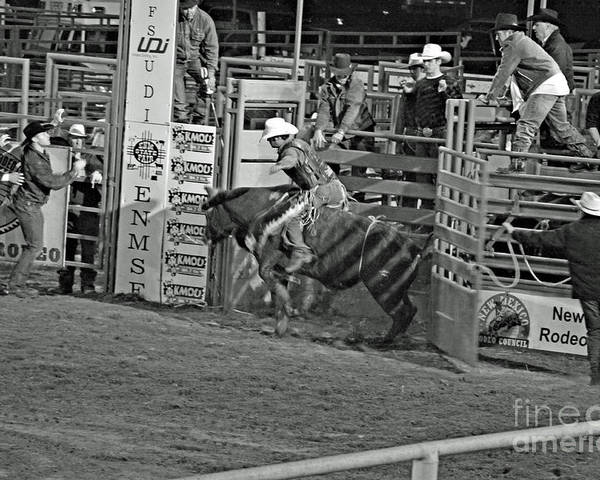 Bull Riding Poster featuring the photograph Out Of The Chute by Shawn Naranjo