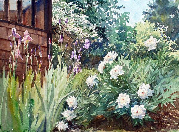 Peter Sit Watercolor Poster featuring the painting Oxenden Peonies by Peter Sit