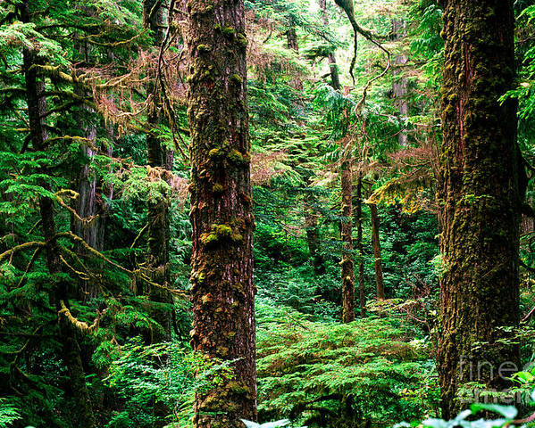 Pacific Rim National Park Poster featuring the photograph Pacific Rim National Park 14 by Terry Elniski