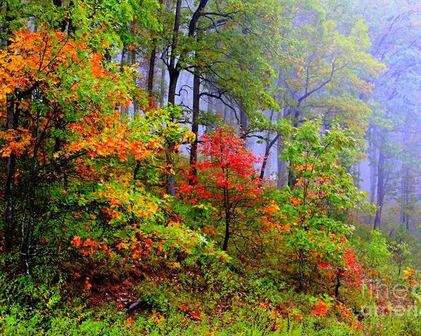 Fall Poster featuring the photograph Painted Autumn by Carolyn Wright