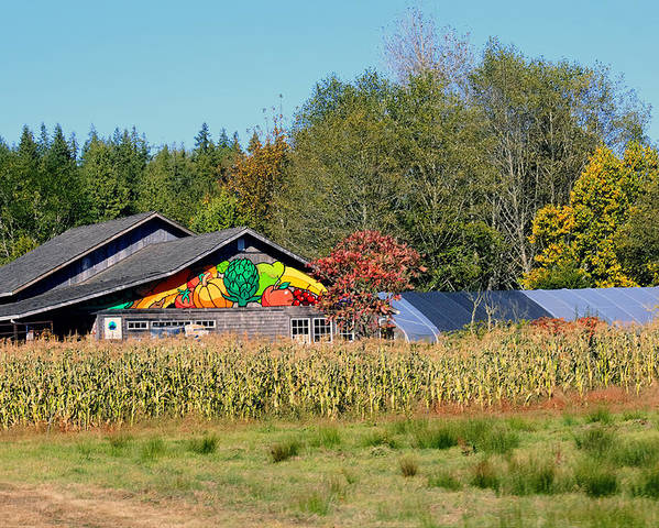 Raw Poster featuring the photograph Painted Barn by Chris Anderson