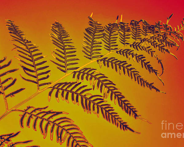 Photography Poster featuring the photograph Palm Frond In The Summer Heat by Kaye Menner