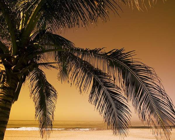 Beaches Poster featuring the photograph Palm Tree And Sunset In Mexico by Darren Greenwood