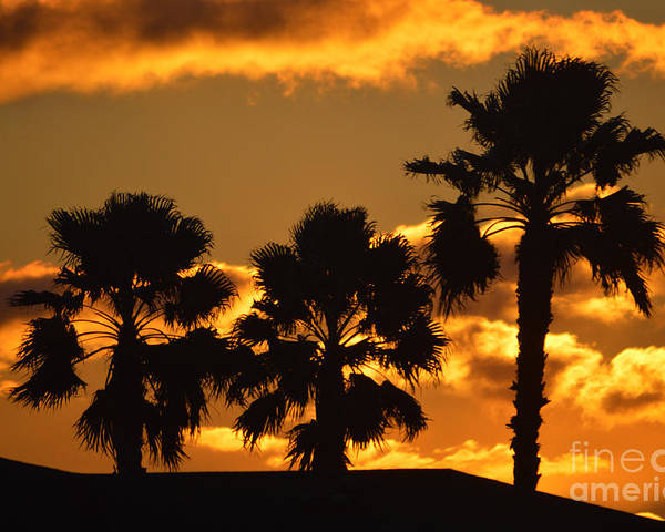 Sunrise Poster featuring the photograph Palm Trees In Sunrise by Susanne Van Hulst