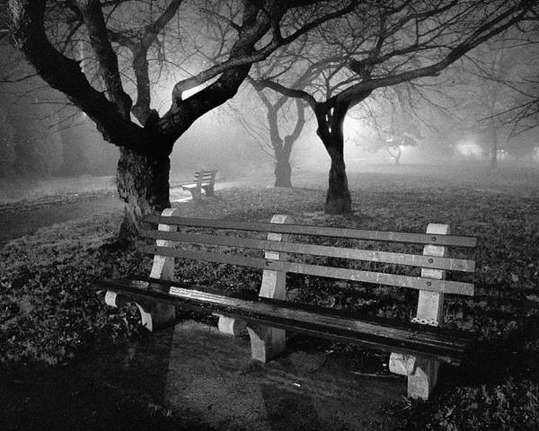 Foggy Poster featuring the photograph Park Benches by Gary Heller
