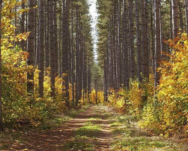 Woods Poster featuring the photograph Path Into The Forest In Autumn Sault by Susan Dykstra