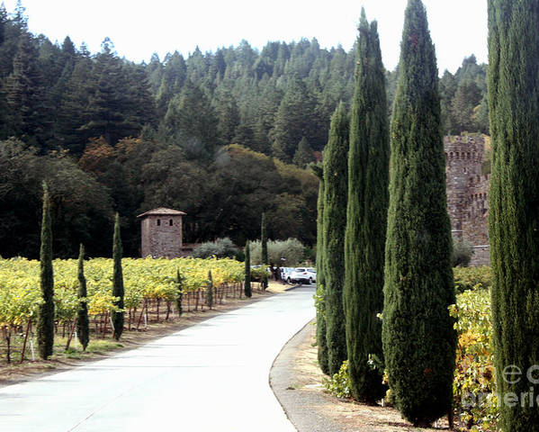 Napa Valley Poster featuring the photograph Path To Amerosa by Gail Salituri