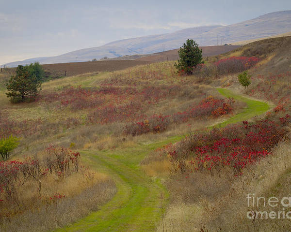 Idaho Poster featuring the photograph Paved In Green by Idaho Scenic Images Linda Lantzy