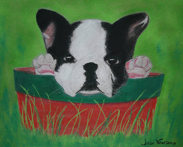 Dog Poster featuring the photograph Peekaboo by M Valeriano