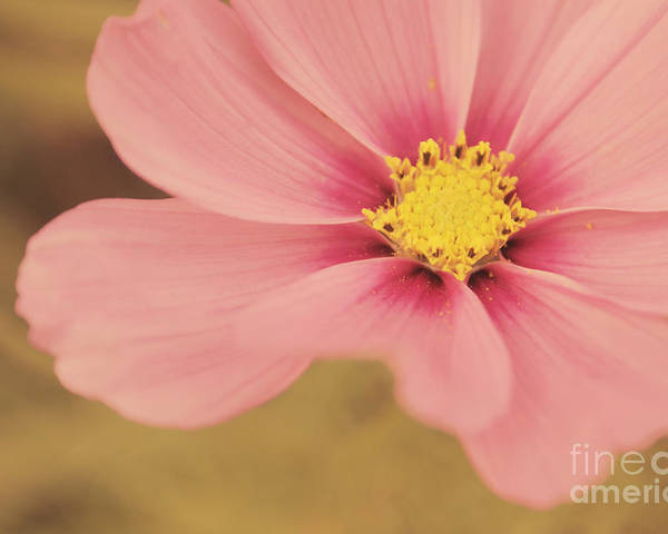 Flower Poster featuring the photograph Petaline - P05a by Variance Collections