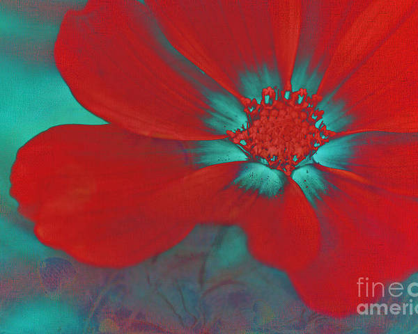 Red Poster featuring the photograph Petaline - T23b2 by Variance Collections