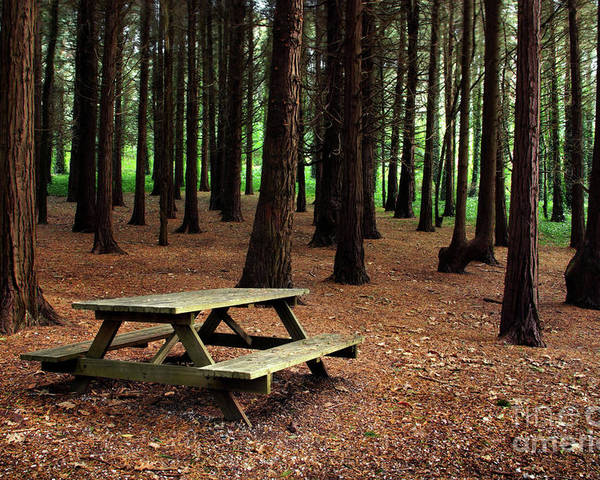 Autumn Poster featuring the photograph Picnic Table by Carlos Caetano