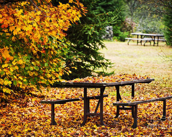 Picnic Table Poster featuring the photograph Picnic Table With Autumn Leaves by Elena Elisseeva