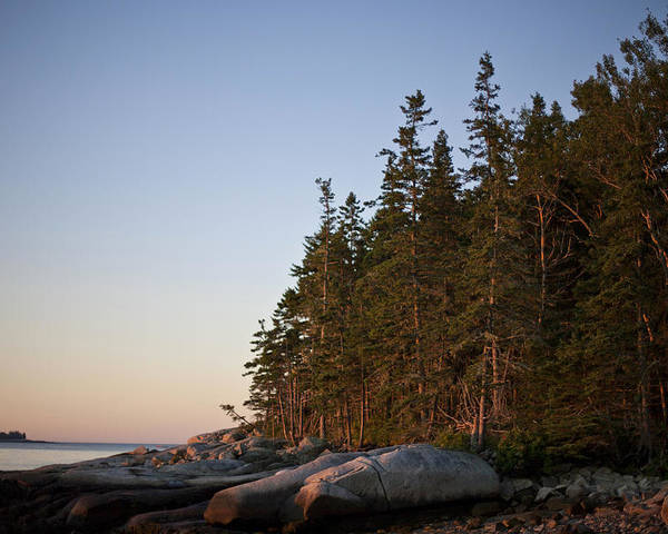 Spruce Head Island Poster featuring the photograph Pine Trees Along The Rocky Coastline by Hannele Lahti