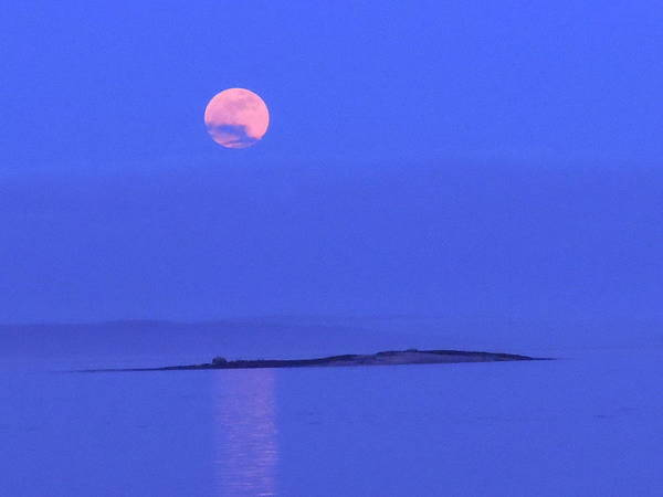 Moon Poster featuring the photograph Pink May Moon by Francine Frank